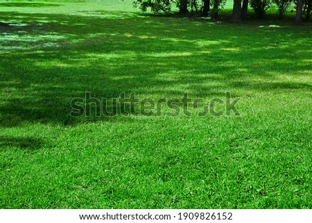 Backyard Shady Fresh Lawn Background Texture. Picnic Place. Country Garden Or Park Green Bright Grass. Background With Trees Shadow. Picnic Family Place On Grass Or Resting Area. Focus Selective. Сток-фото ©