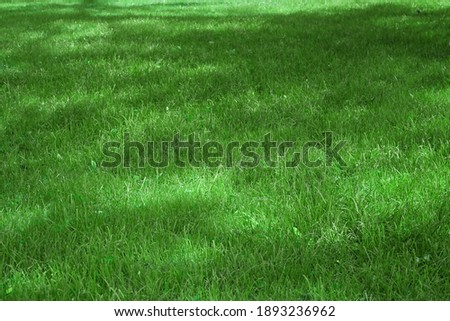Backyard Shady Fresh Lawn Background Texture. Rolled Lawn. Country Garden Or Park Green Bright Grass. Background With Trees Shadow. Picnic Family Place On Grass Or Resting Area. Focus Selective. Сток-фото ©