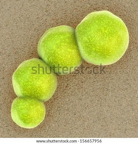 Bacteria - Staphylococcus aureus bacteri
