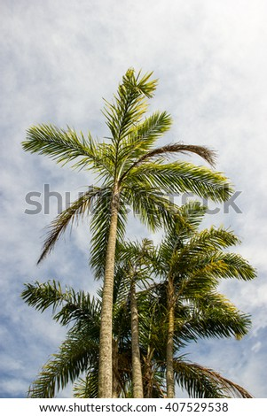 Bactris gasipaes (Pupunha) tree detail. From this tree they get the best palm hearth in Brazil.