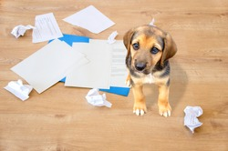 Bad dog sitting on the torn pieces of documents looking at camera.