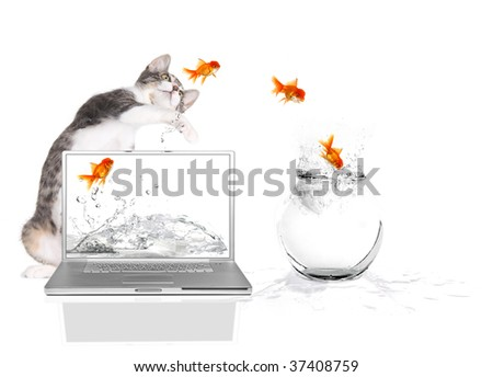 Bad Kitty Pawing at Goldfish Flying Out of Water