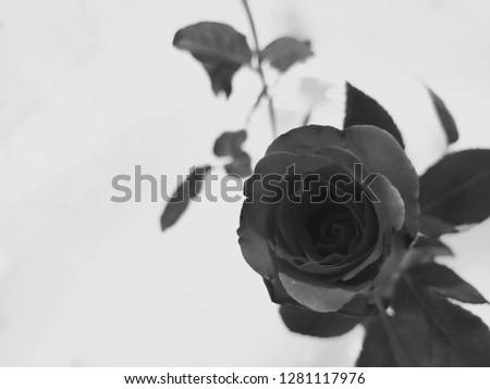 Bad romance in valentine #1281117976