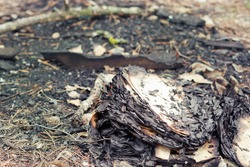 badly burned book, lies on the pine needles among the cones and dry broken branches