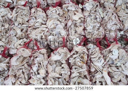 Oyster Shells For Sell Oyster Shells Ready For