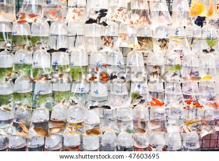 Bags of fishes for sale at a market