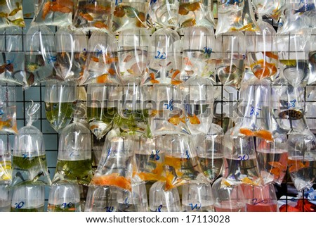 Bags of goldfish for sale at a market