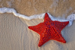 Bahama Starfish on the beach with incoming waves from the ocean.