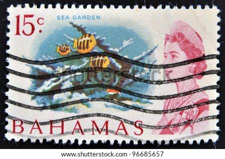 BAHAMAS - CIRCA 1965: A stamp printed in Bahamas shows sea garden, circa 1965