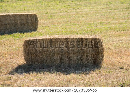 Bailed hay, animal feed drying under the sun