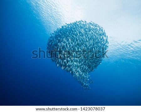 Bait ball in coral reef of Caribbean Sea around Curacao at dive site Playa Piskado #1423078037