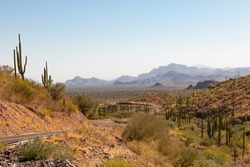 Baja California main road running through cactus trees in a gorgeous mexican landscape