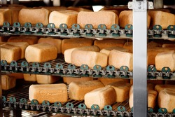 Baked square breads on conveyor food automatic production line bakery from hot oven.