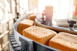 Baked square breads on conveyor food automatic production line bakery from hot oven, sunlight.