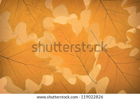 Bakground made of autumn brown and orange leaves