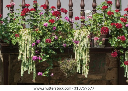 Balcony decorated with geraniums and cactus #313759577