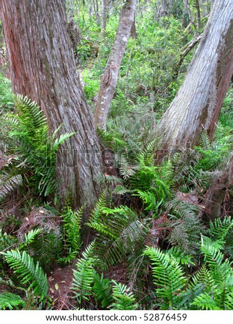 Bald Cypress and Marsh Ferns