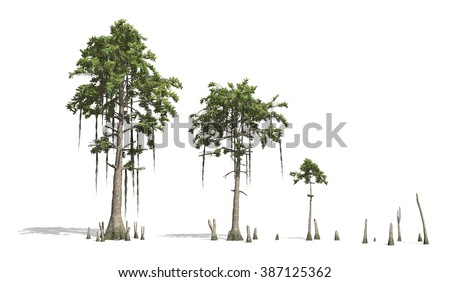 Bald Cypress tress render on white background.