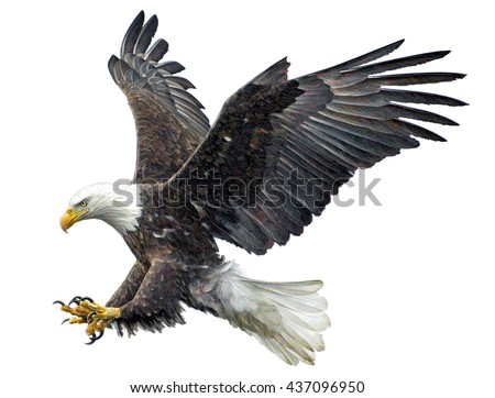 Shutterstock Bald eagle fly landing hand draw and paint on white background illustration.