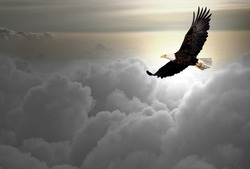 Bald eagle flying above the clouds