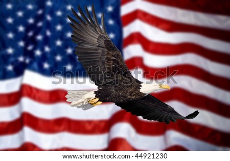 Bald eagle flying in front of the American flag