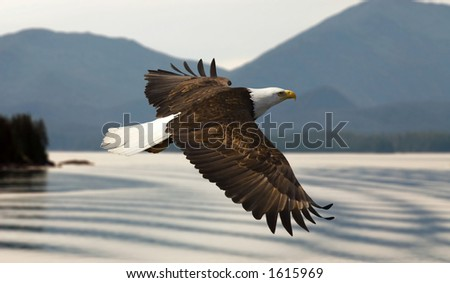 bald eagle flying over lake with mountains