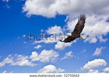 Bald eagle in cloudy blue sky
