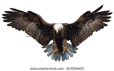 Shutterstock Bald eagle landing hand draw and paint color on white background illustration.
