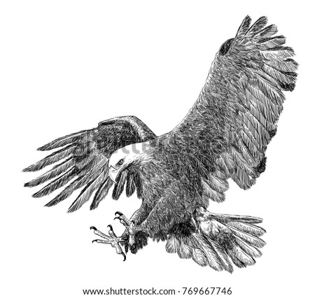Stock Photo Bald eagle swoop attack hand draw sketch black line on white background illustration.