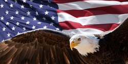 Bald eagle taking flight in front of an American flag