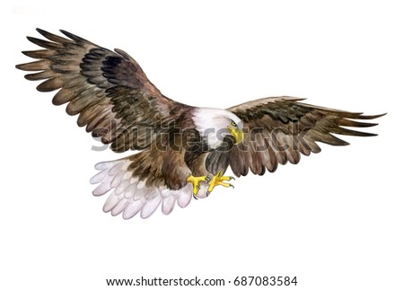 Bald Eagle. White head Eagle isolated on white background. White-tailed eagle. Watercolor. Illustration. Bird. Picture. Image