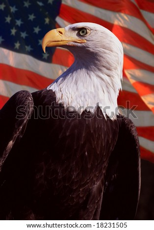 bald eagle with flag in background