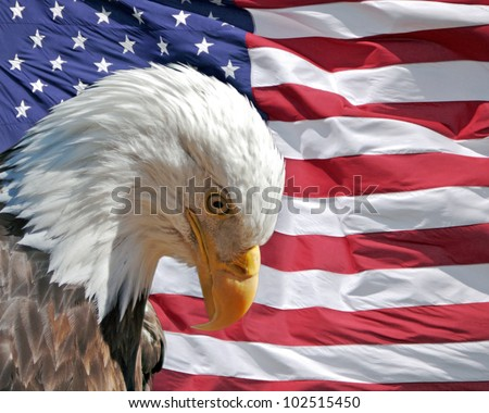 Bald eagle with its head bowed respectfully in front of the flag of the USA