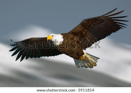 bald eagle with light on face and in flight against illustrated mountain background