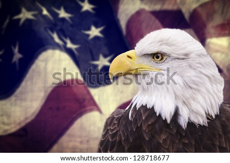 bald eagle with the american...