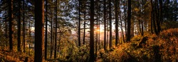 Bald Peak State Park - Oregon