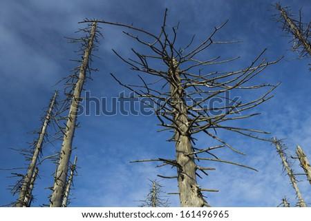 Bald trees against blue sky