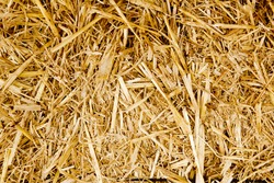 bale golden straw texture ruminants animal food background