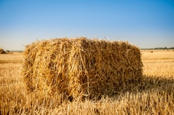 Bale of hay. agriculture farm and farming symbol of harvest time with dried grass straw as a bundled tied haystack