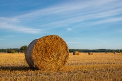Bale of hay in a wide farm field under the beautiful blue sky on a sunny weather. Harvesting in late summer, farming, food for animals.
