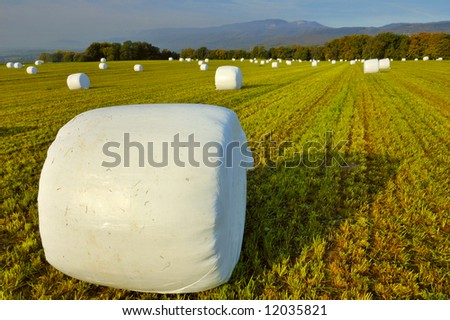 Bales of a green crop, wrapped up in plastic for storage. Jura mountains in the background.