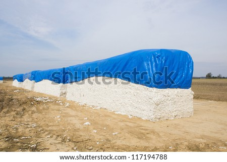 Bales of cotton against cotton field in Arkansas
