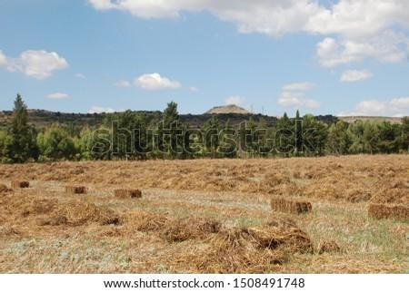 Bales of fodder for livestock #1508491748