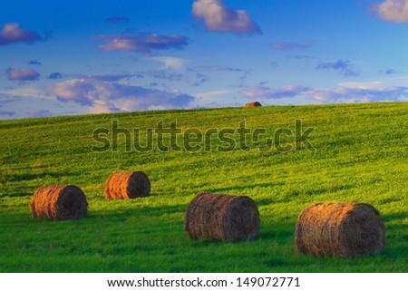 Bales of Hay-haymaking Zdjęcia stock ©