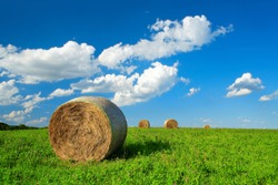 Bales of Hay in Green Field of Clover under Blue Sky with Clouds