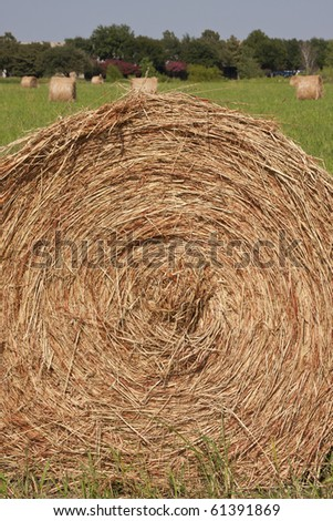 bales of hay in open pasture