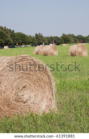 bales of hay in pasture