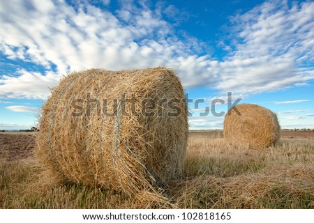 bales of hay in the farm field at summer/hay rolls in the farm field