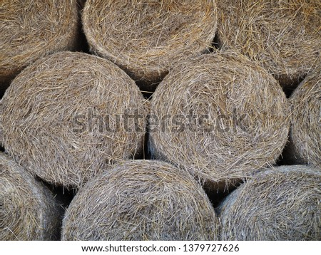 Bales of hay, straw rollers, close up of stacked bales of hay #1379727626