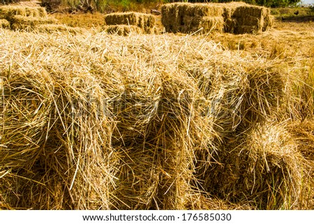 Rice Straw Uses Bales of Rice Straw in